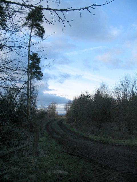 Track into Stragglingwath Plantation