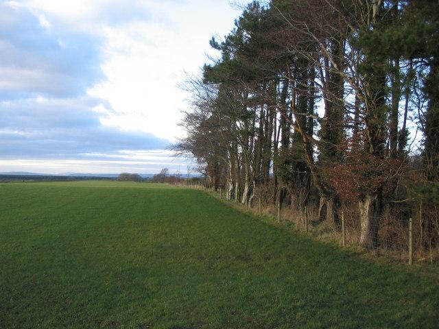 Farmland near Longbridgemuir