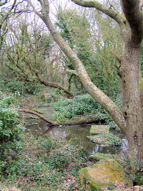 Cooden Moat near Bexhill