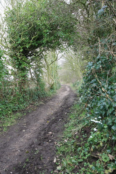 Bridleway to Preesall