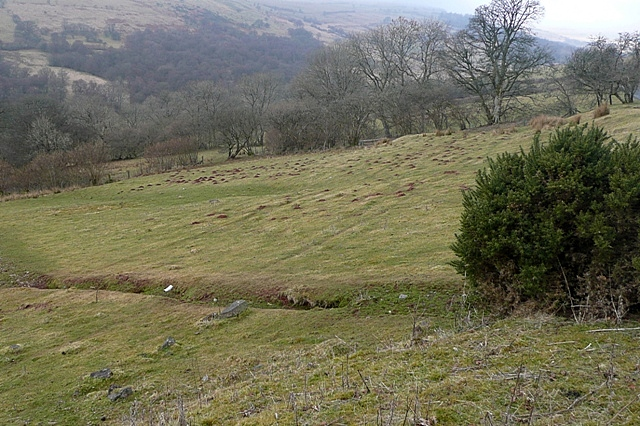 Cilieni valley