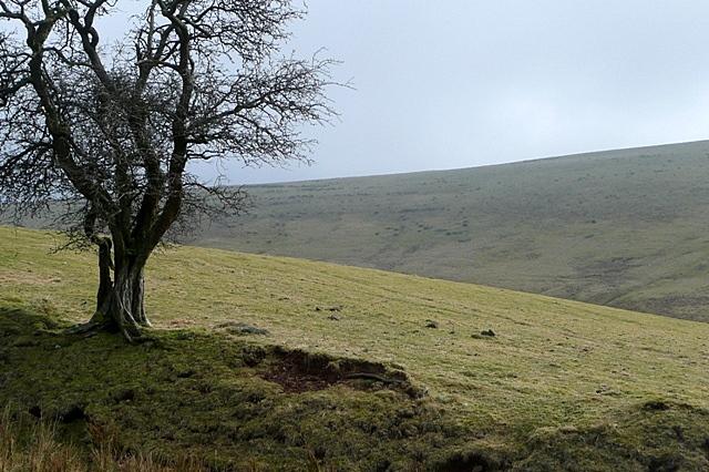 Moorland near Cefn-bryn