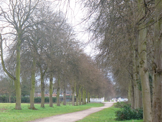 Melancholy Walk
