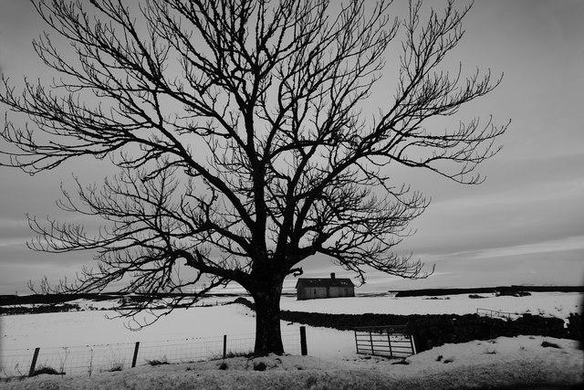 Tree, hut & dyke, Colaboll, Loch Shin