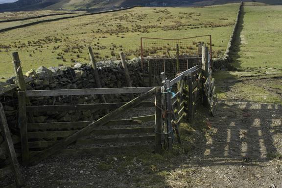 Sheep Pen, Long Lane