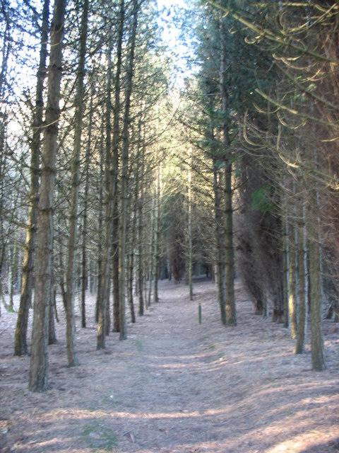 Permissive path through Coed Wylfa