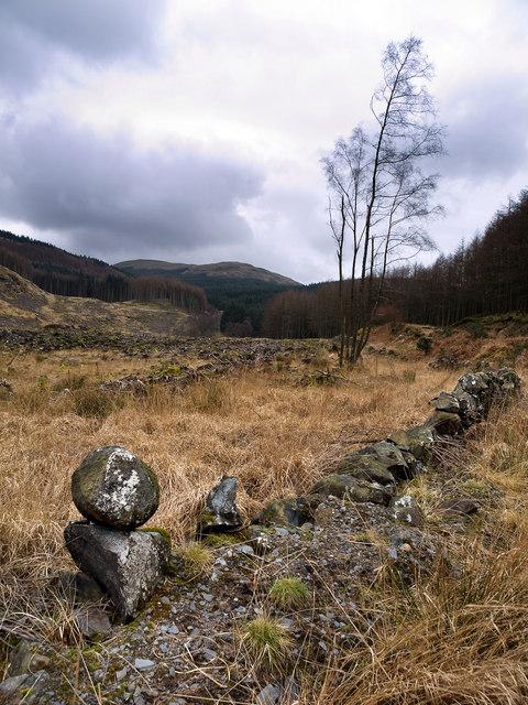 Old Dyke near the Caldons Burn