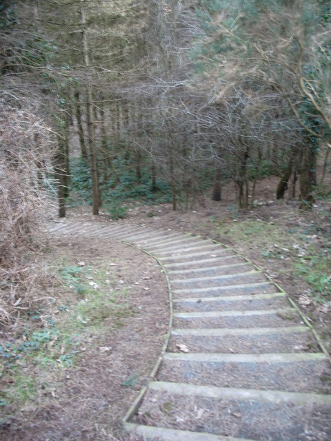 Steps on the Coed Wylfa permissive path