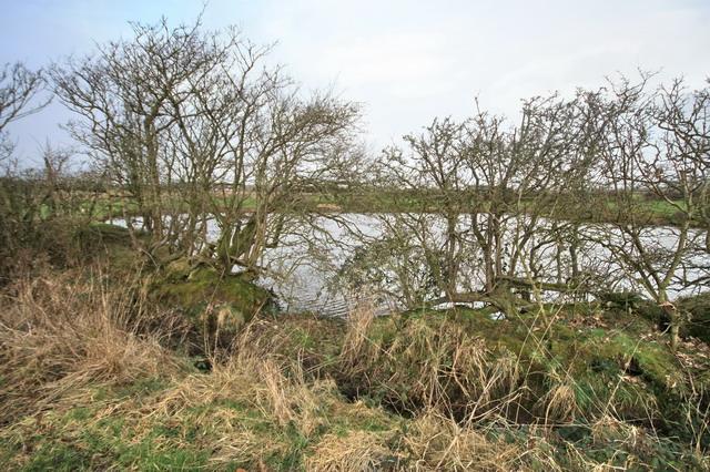 Pond near Grange Pool