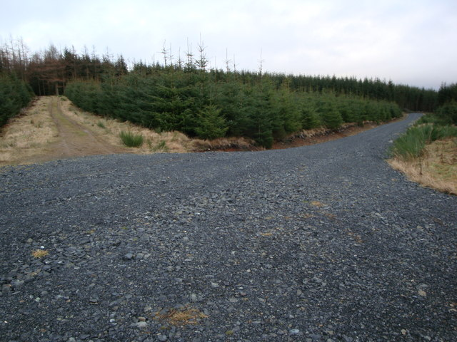 New Forestry Track