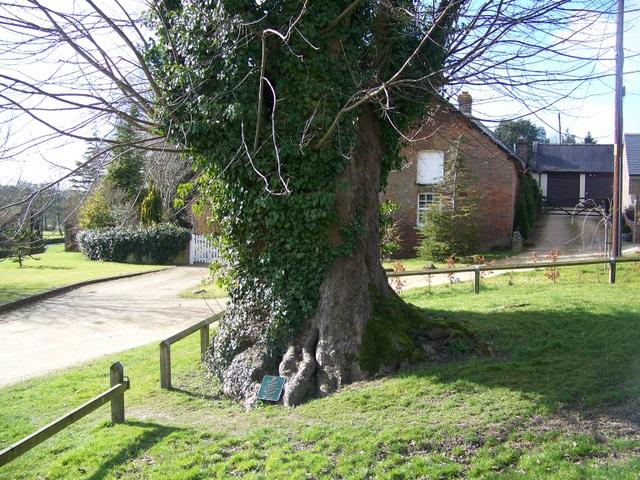 Martyrs Tree