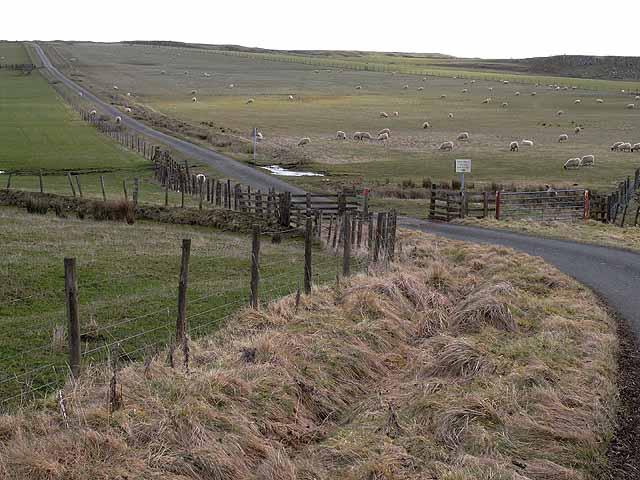 Cattlel Grid