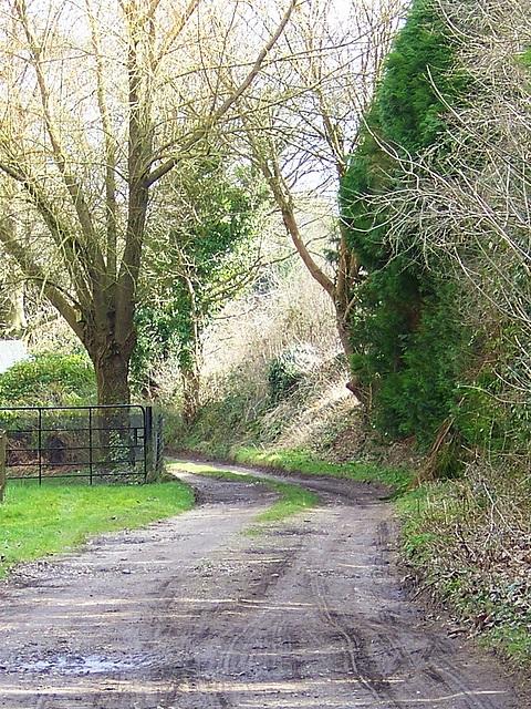 Bridleway, Athelhampton