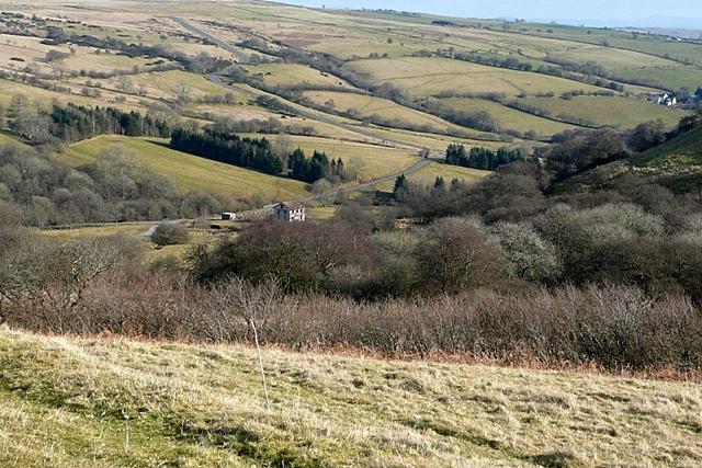 Woodland above Ysgir Fechan