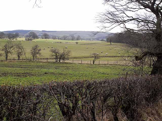 Pastoral scene near Hallington