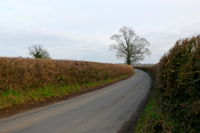 Country Lane near Stake Ford Cross