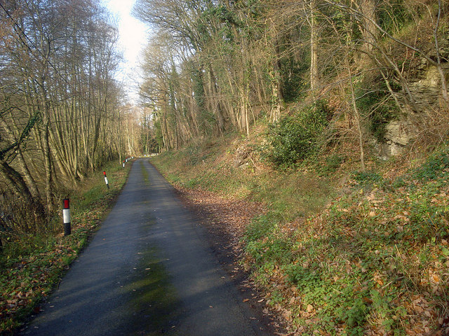 Lane at Garden House Wood