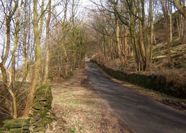 Lane rising through woodland