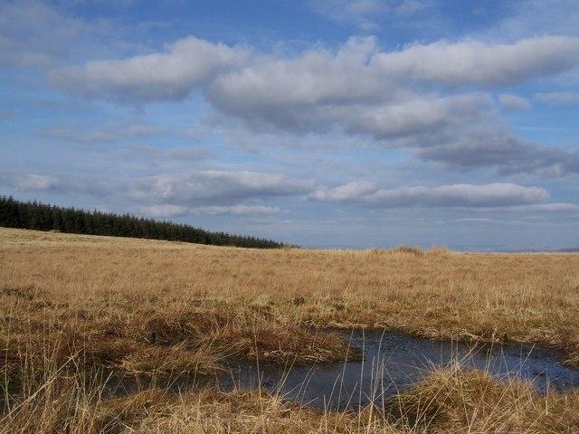 Boggy ground on Mynydd Pencarreg