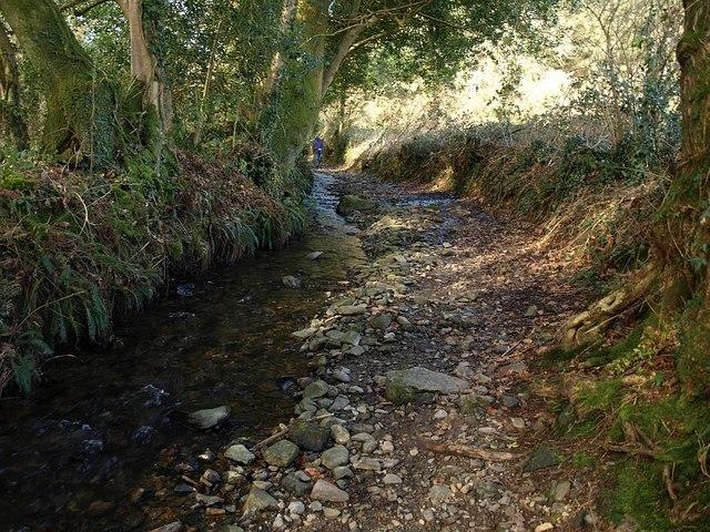 Water lane, Scorriton