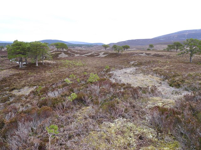 Abernethy National Nature Reserve (Southern edges)
