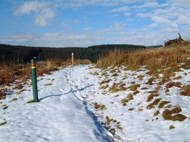 Craigieburn Forest trail