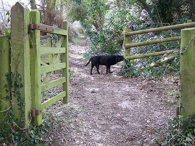 Bridleway to Cowpound Wood