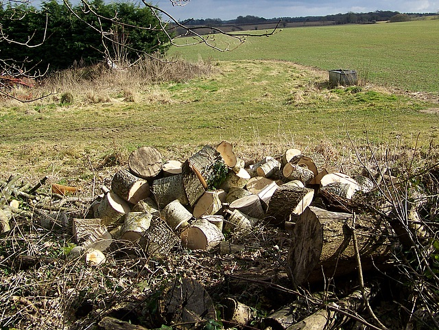Log pile, Highwood Dairy