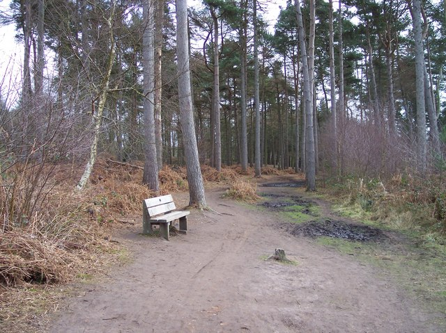 Baker Way footpath in Delamere Forest