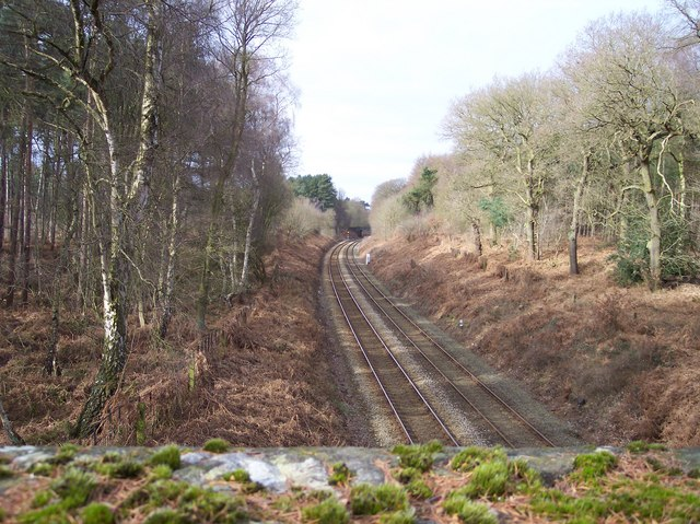 Chester to Manchester railway in Delamere Forest