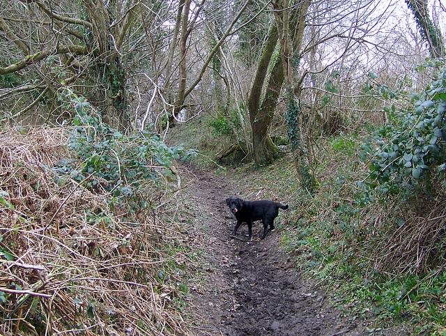 Bridleway to Admiston Farm