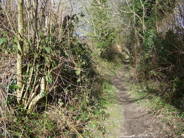 Bridleway to Athelhampton