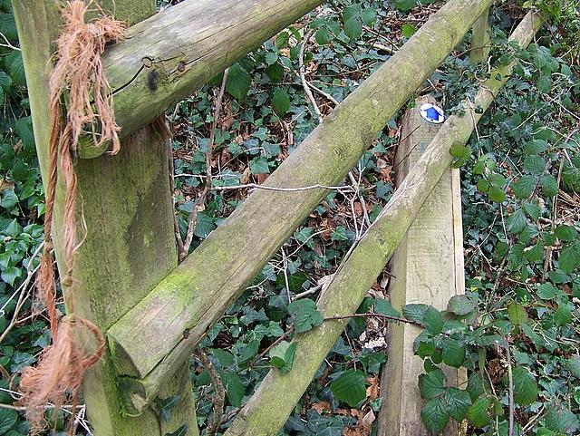 Broken gate, Athelhampton
