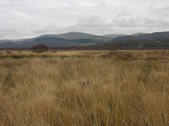 Cors Fochno west of Llancynfelyn