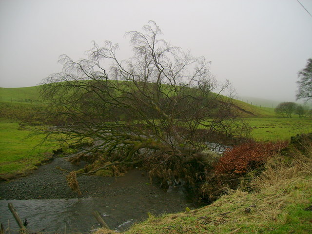 Tree fallen over Water of Assel