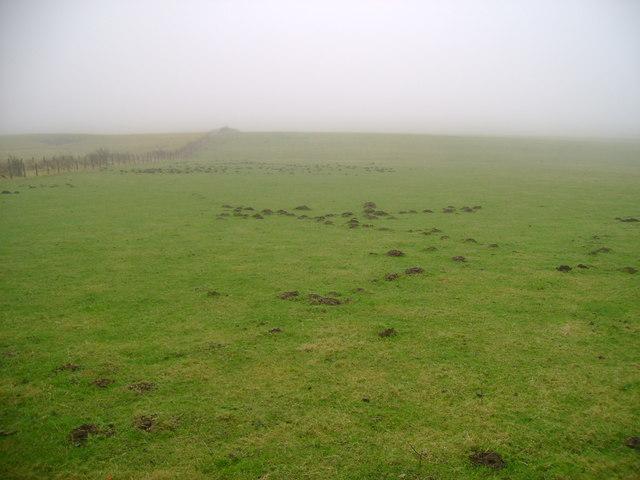 Mist and molehills