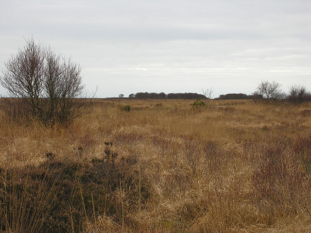 Cors Fochno south of Ty Mawr