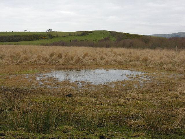 Bog pond near Ty Mawr