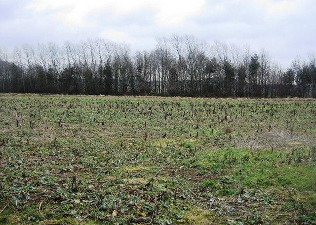 Dark trees & a field