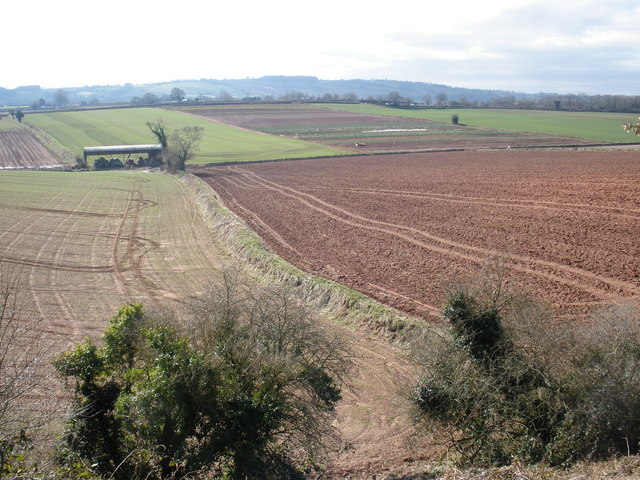 Farmland, near Halberton