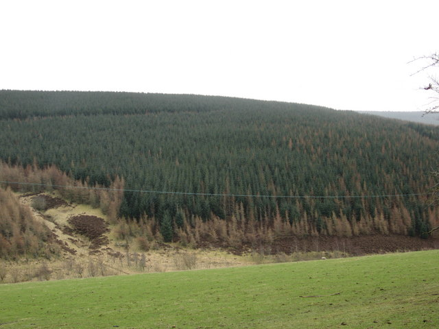 Heavy  tree cover on the Borders hills