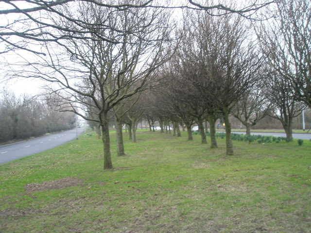 Winter trees in Western Road