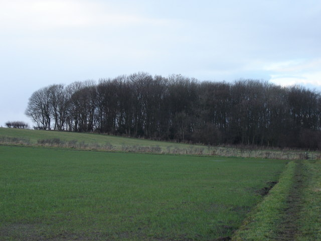 Surgate  Brow  Plantation