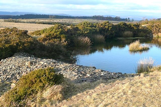 Pond near Waunlwyd