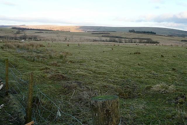 Pasture above Crychan forest