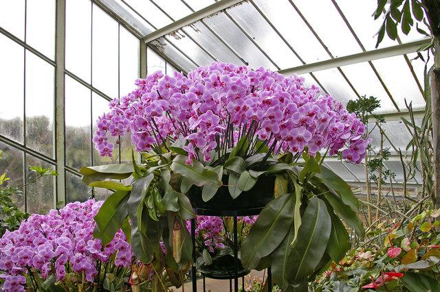 Orchids, Kew Gardens, Surrey