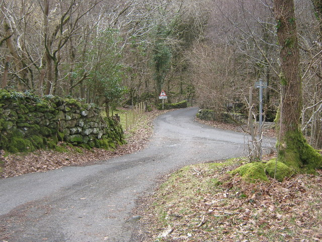 Road junction in the woods