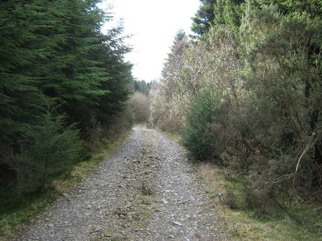 Forest track on Tir Stent