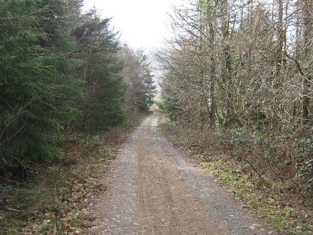 Forest track on Tir Stent