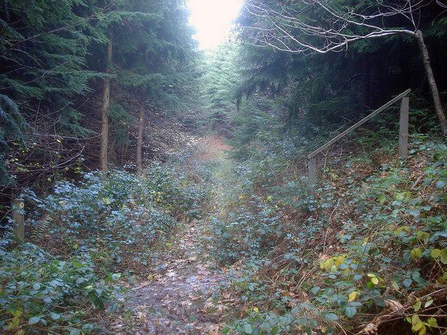 Footpath in Pokeshouse Wood - 1